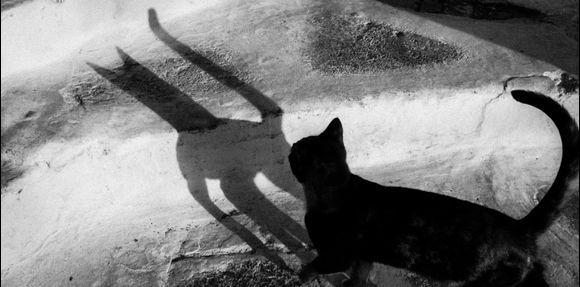.... devilish character....