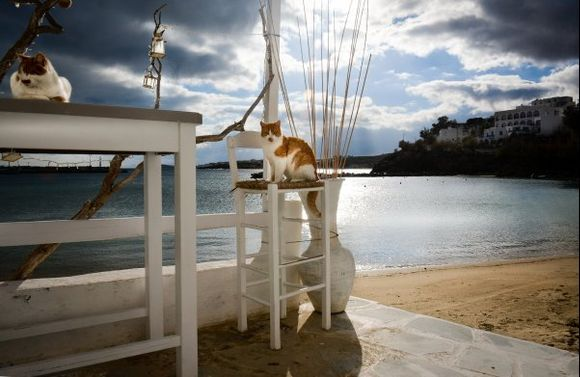 ...angry skies, calm cats....