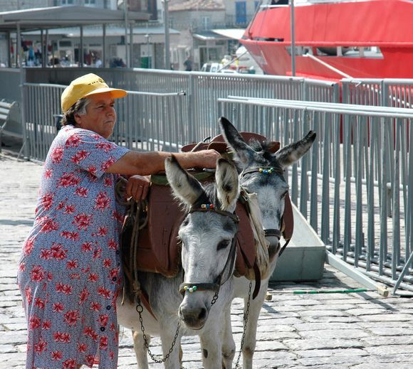 There are many donkeys on the island, most are used privately or for trips in the city with children. When it comes to transporting goods, mules or horses are used,
