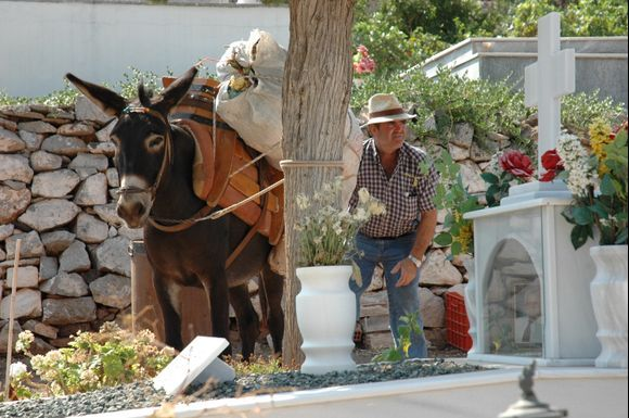 The donkeys take lighter goods and rubbish, here from the cemetery
