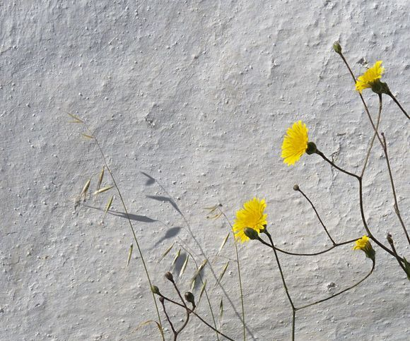 Weeds and white wall
