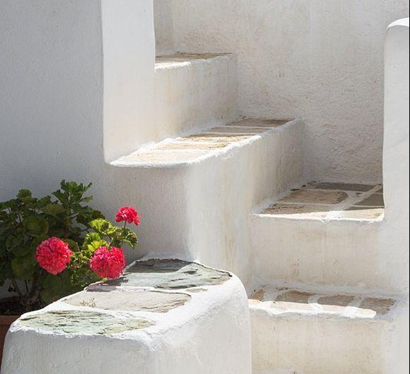 Geraniums and steps