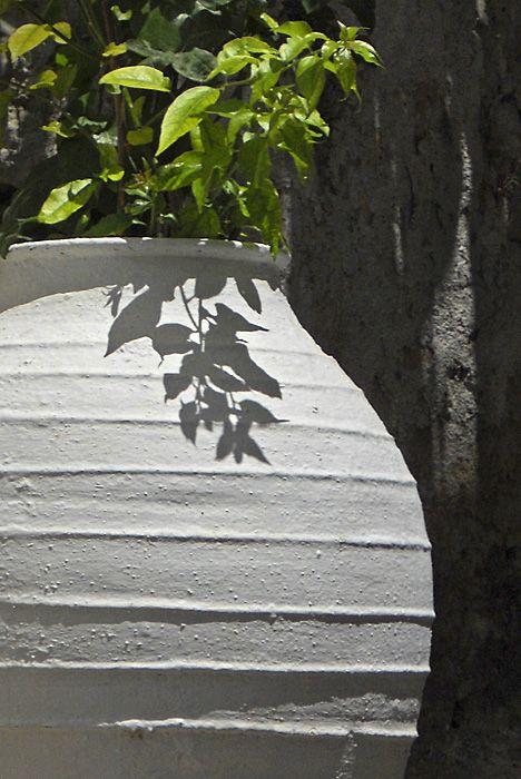 White pot with plant, Filoti