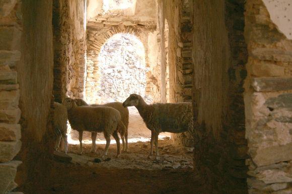 Melanes Monastery and Sheeps
