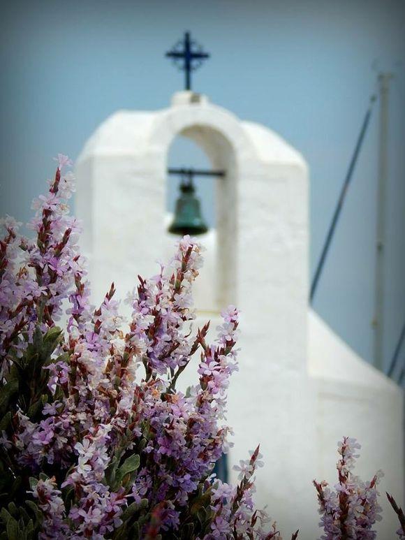 | Aegina |