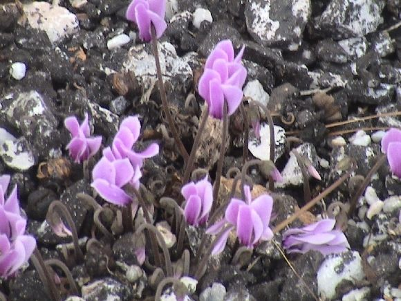 Flowers on Stafylos
