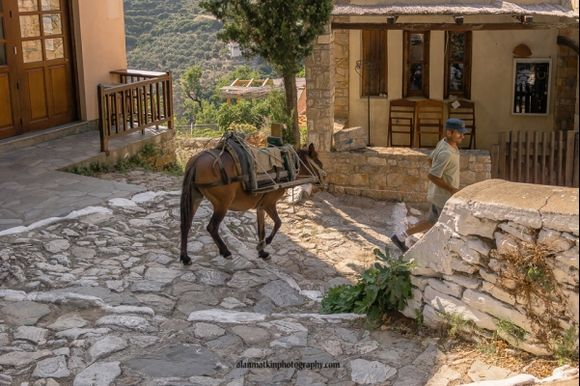 A working donkey carrying supplies in the old town
