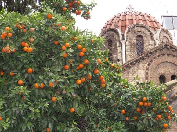 blessed oranges