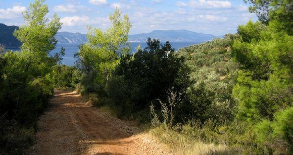 Track leading to Megali Ammos through pines, wild heathers and oregano - the aroma!