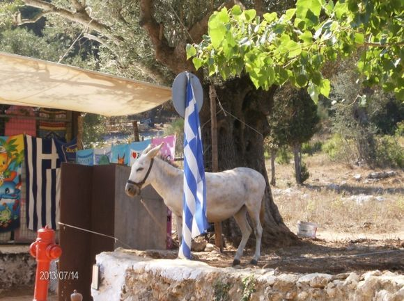 Donkey near the Moneastery of St. Dyonisos