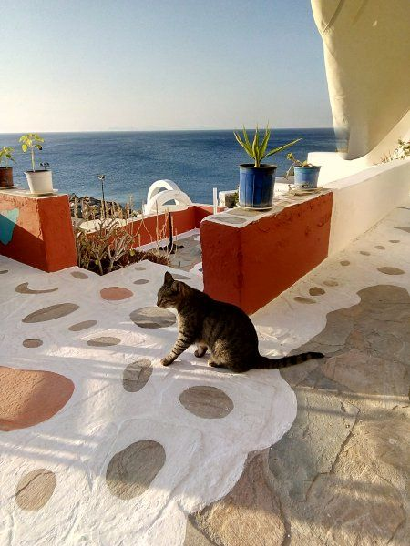 This is Spartako, one of the lucky cats living at Alopronia port.