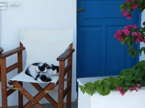 Sleeping cats at Chora