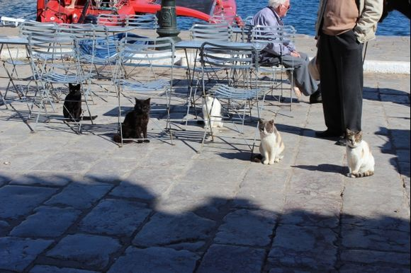 Cats of Hydra, waiting for fish….. spring 2014