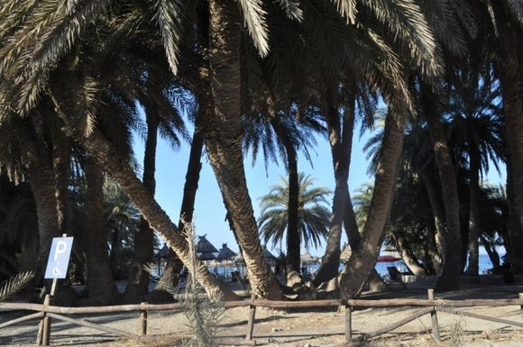 Vai Palm Beach Crete