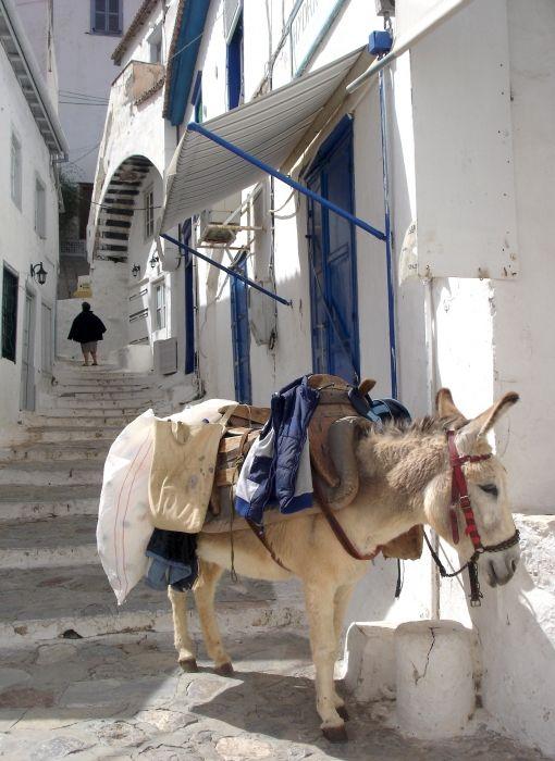 up to Donkey street, Hydra