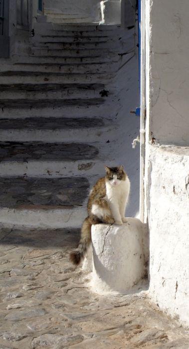 Cat on step