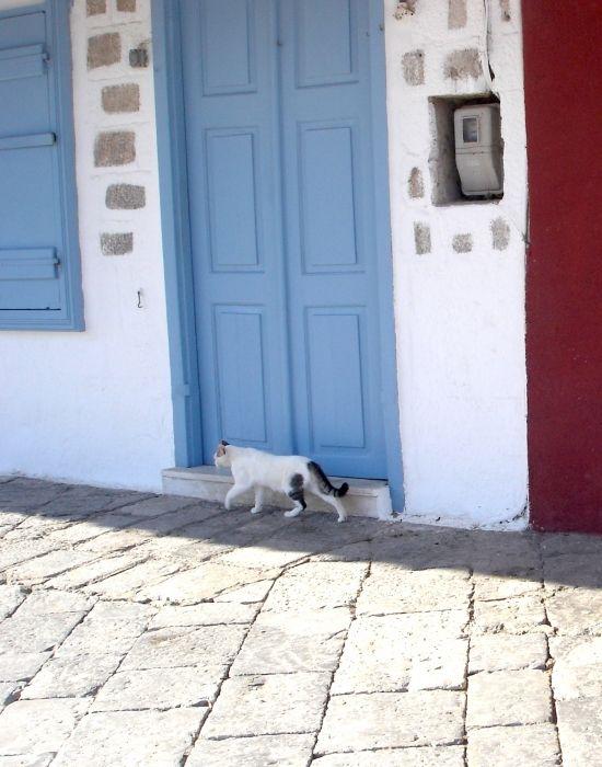 Hydra Cat