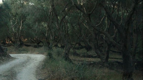 Dancing with Olive Trees