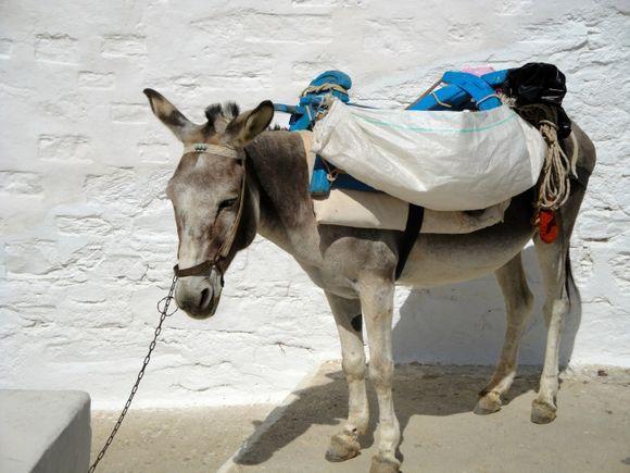 A donkey in Karavostassi