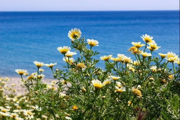 Spring is beautiful in Crete! :-)