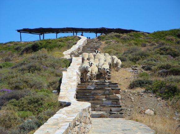 Sheep and poets...