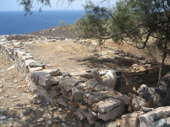 Path to Livadaki