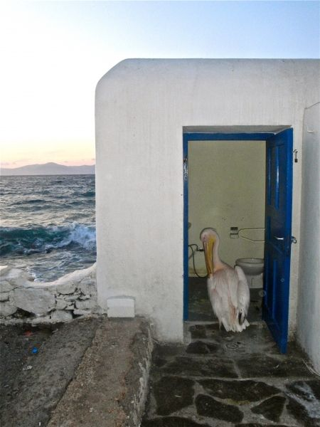 Petro needs a toilet... :-)