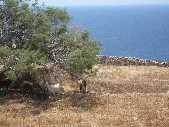 Path to Livadaki beach