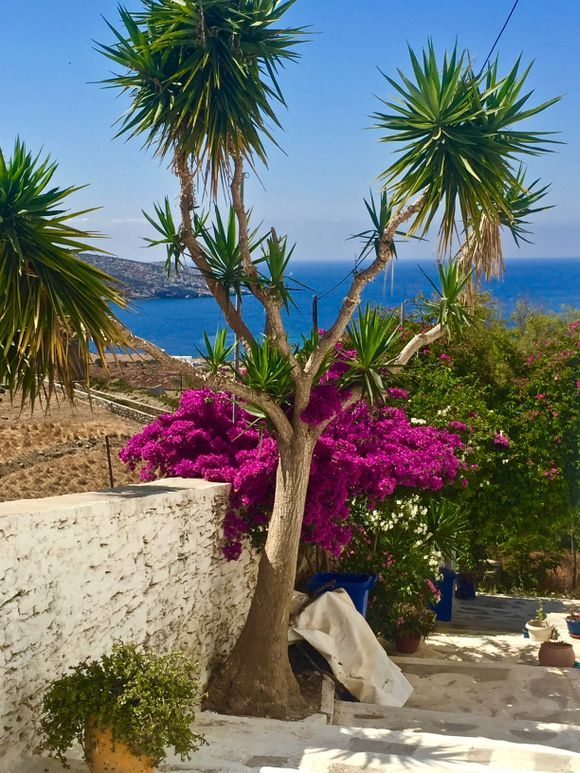Chora of tiny Schinoussa Island, first days of June 2019: spring beauty in the Little Cyclades