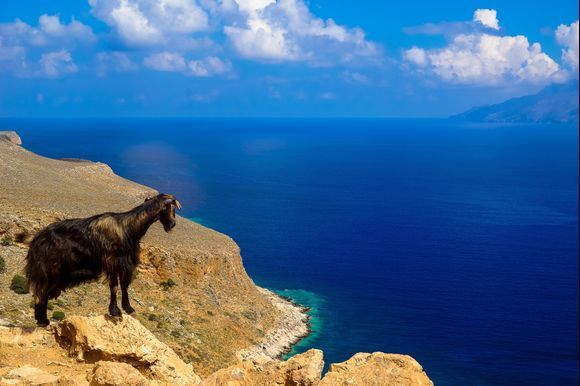 Goats on the way to Balos beach