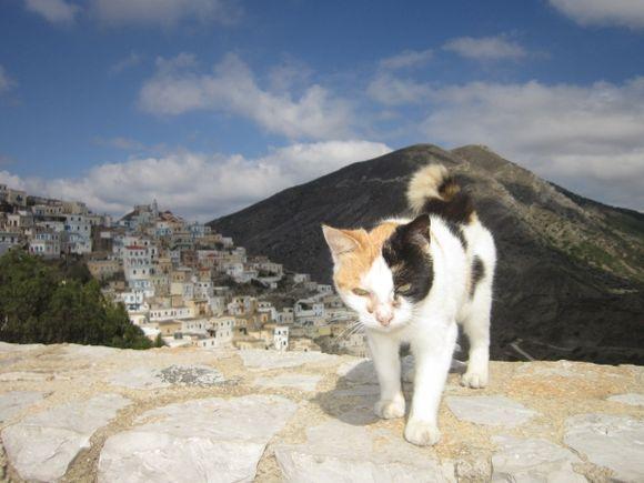 Olympos cat