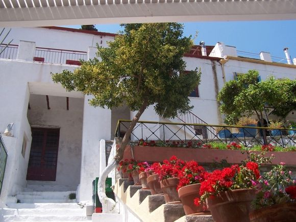 Brilliant red flowers lined up in pots on steps near Rolandos