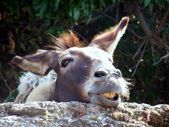 Smiling Donkey on Path to Liondas