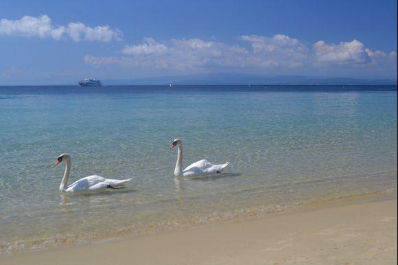 Swans in the sea at Koukounaries Beach