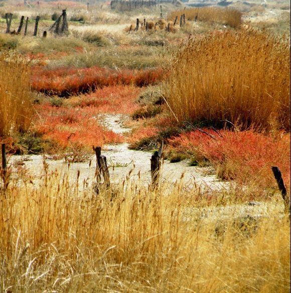 Saltworks Kalloni in Autumn colours
