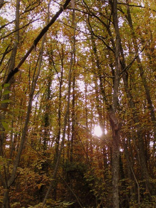 Autumn in Agiassos