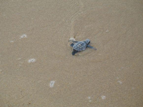 Newborn turtle!
