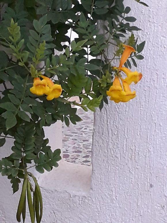 Yellow on white...