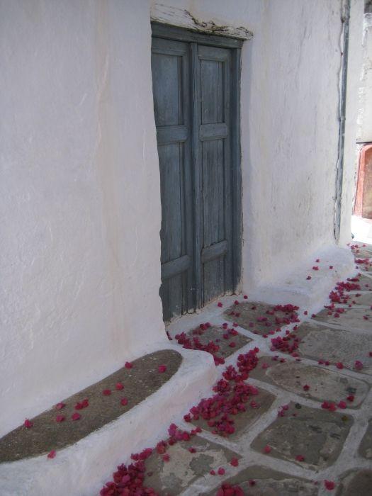 Bougenvillea petals