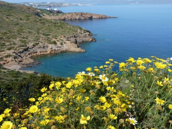 View of Lavrio and flowers