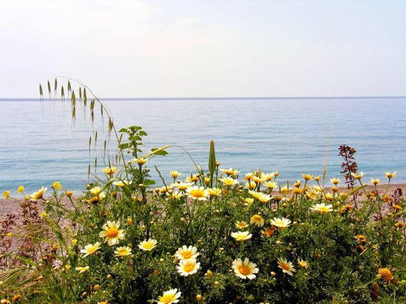 springtime on Crete (Ierapetra)
