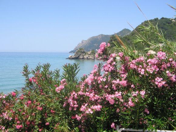 Pelekas Beach flowers