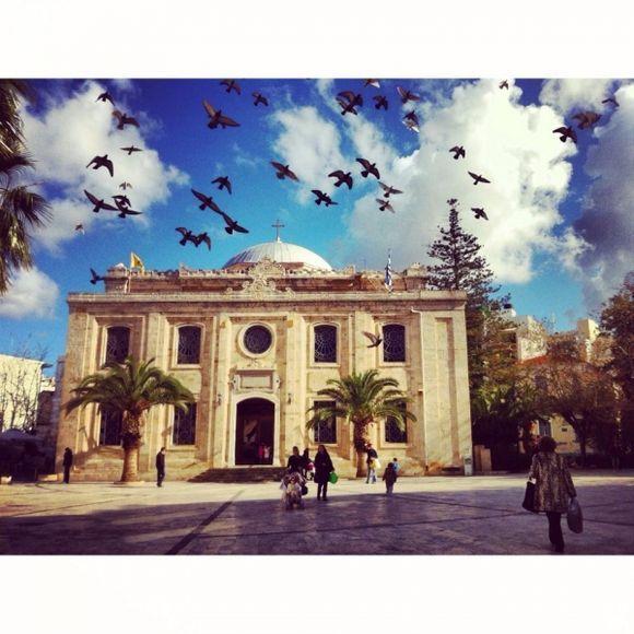 Flurry of pigeons