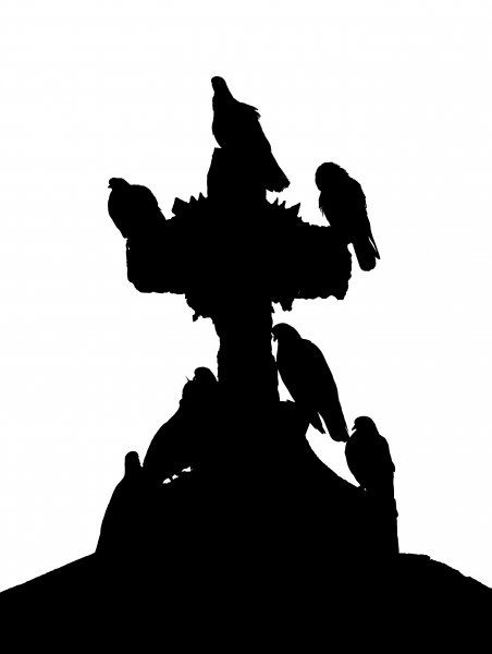 pigeons and Christianity