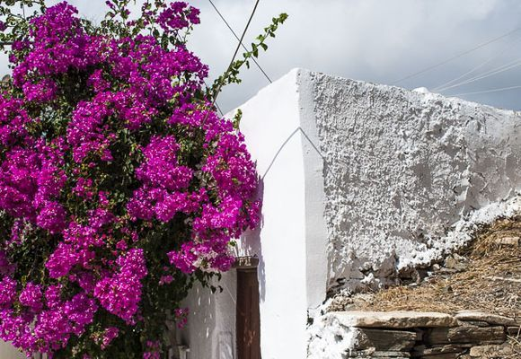 Flowers and textures (in Mili)