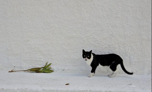 Cat in Kolombari