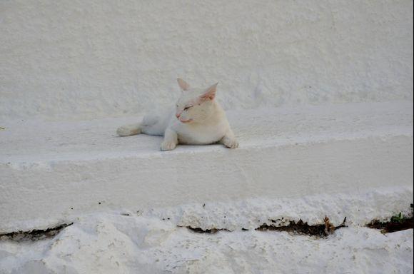 Cretan cat in Kolombari