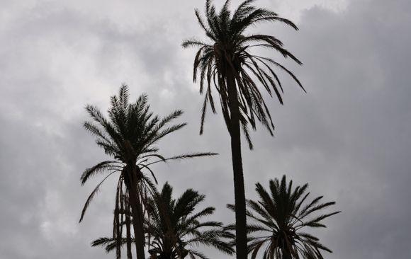 Before the rainstorm
