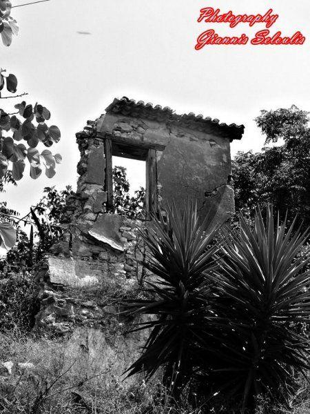 in the ruins Kyparissia Trifylias