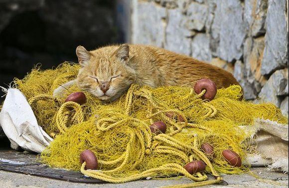 Harbor cat in Livadia
